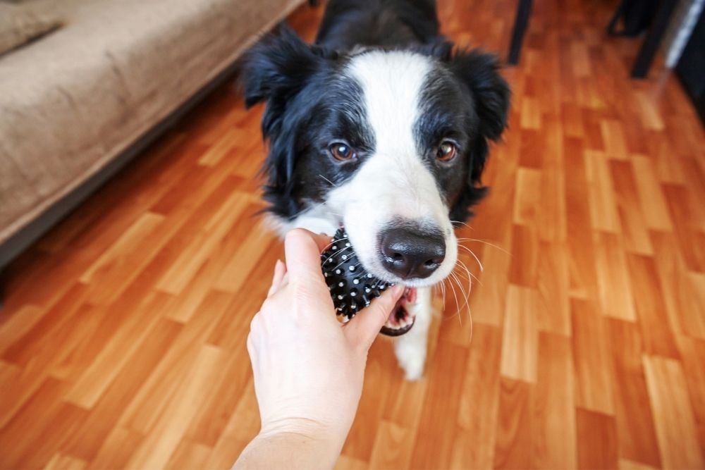puppy-dog-bringing-toy-to-owner