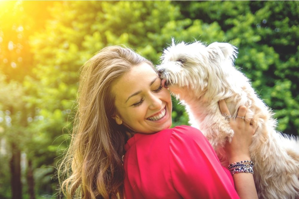 puppy-white-dog-licking-its-owner
