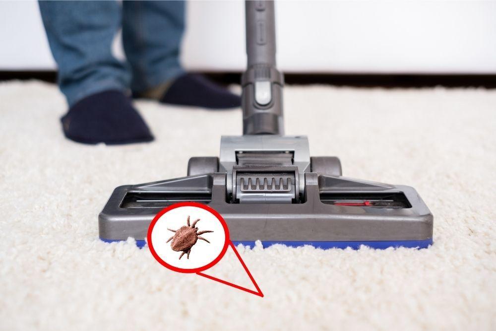 vacuuming-carpet-to-get-rid-of-fleas