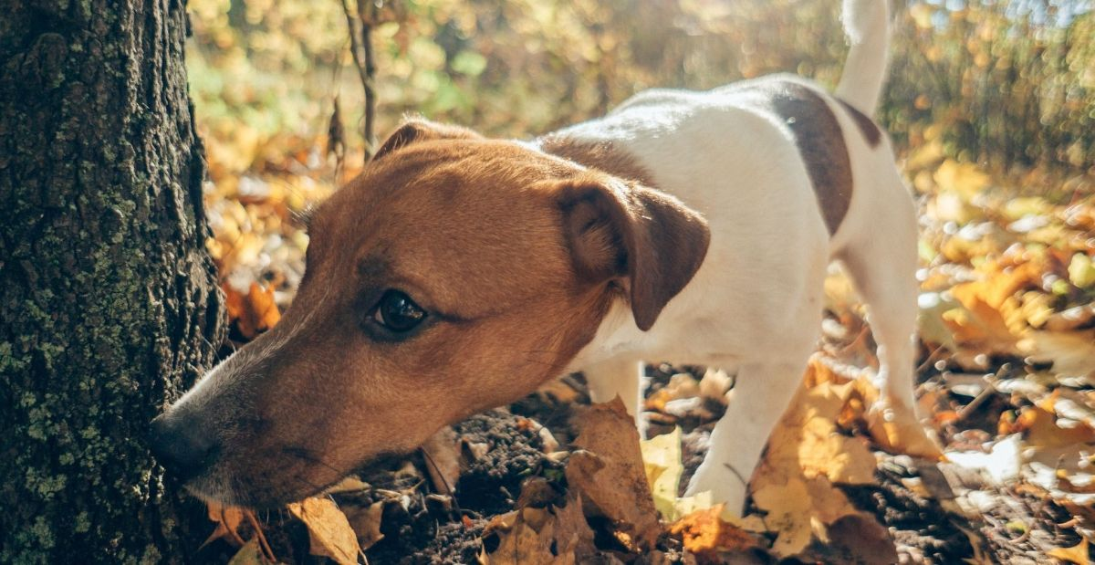 why-does-my-dog-lick-other-dogs-urine