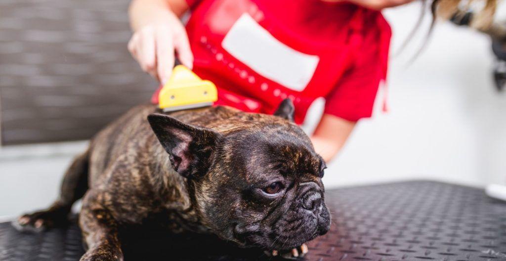 best-brush-for-french-bulldog