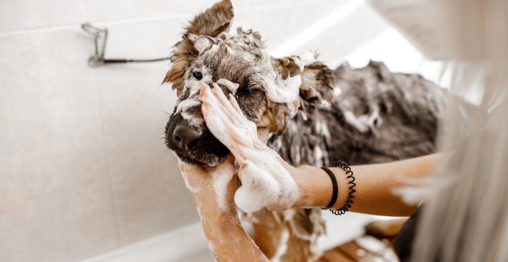 best-shampoo-for-german-shepherd